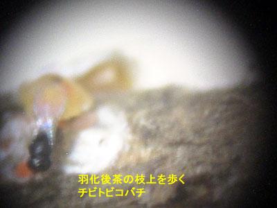 chibitobi01.jpg