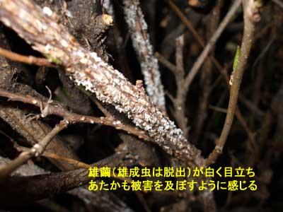 kuwashiro002.jpg